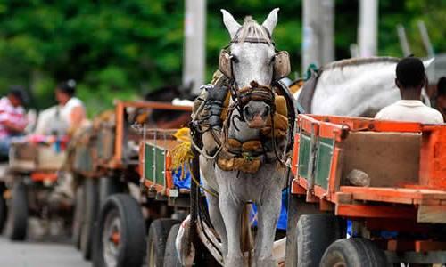 Vehículos de tracción animal podrían desaparecer de Cartago